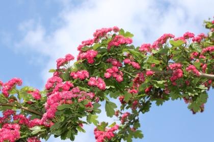 Eine Brücke aus Blumen am Himmel