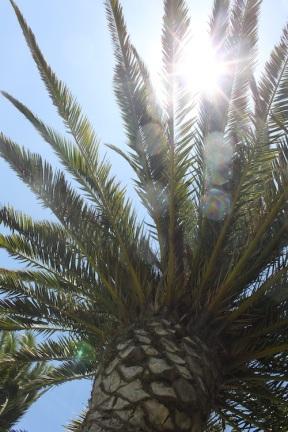 Palme als Sonnendach