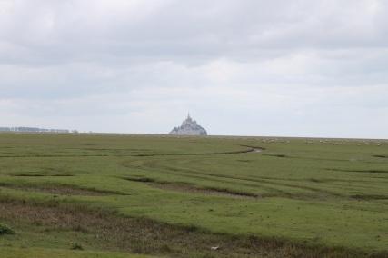 Schafweide mit Mt. Saint Michel